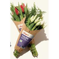 Longo's Premium Tulips With Winter Greens Soil Grown